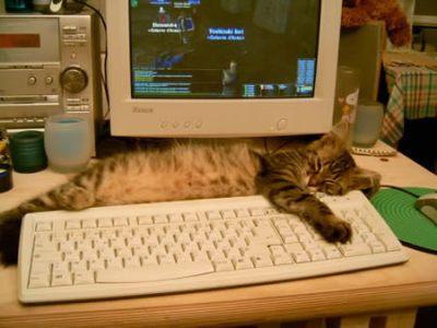 Cat photo1