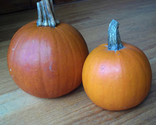 sugar pumpkins (2)