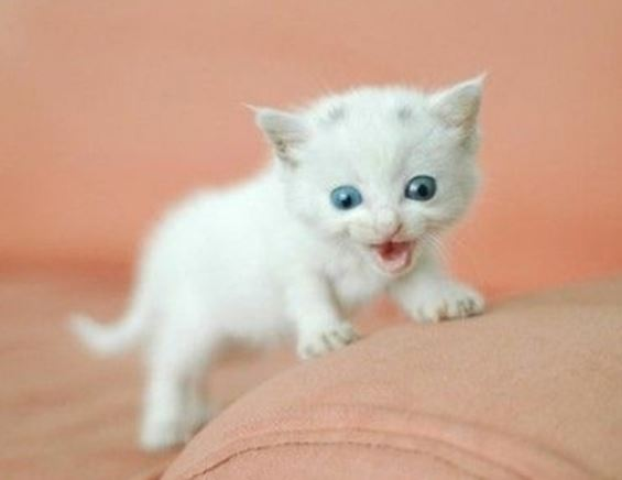 media kitten